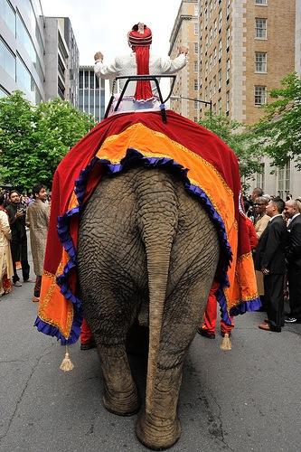 Elephants at Indian Weddings