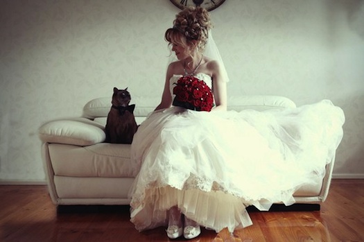 cat bride fun