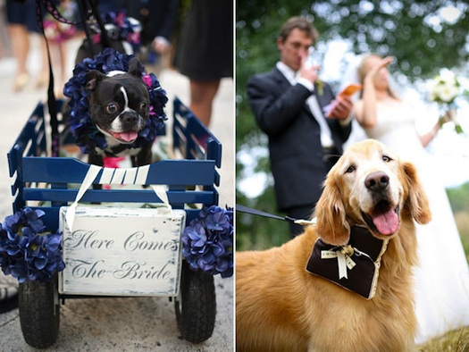 cute pets at wedding