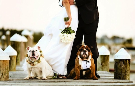 pets at a wedding : dogs