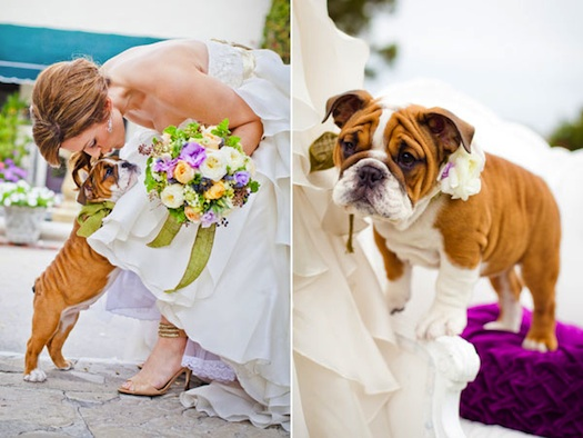 pets at a wedding