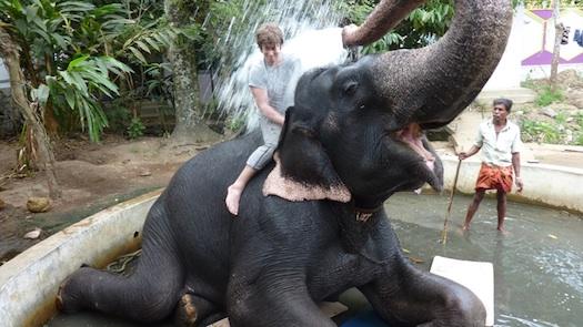 elephant shower in kerala