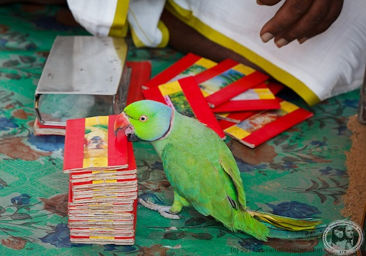 parrot used at indian weddings